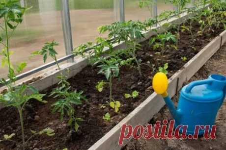 45 секретов небывалого урожая томатов - Наша дача - медиаплатформа МирТесен