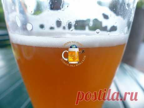 5 недорогих марок хорошего российского пшеничного пива без химии!   С Миру по Пиву!   Яндекс Дзен