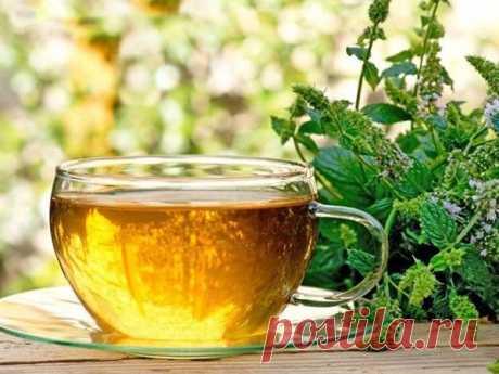 Как ферментировать мяту и мелиссу на зиму: интересный способ сушки Чай из сушеных трав, к сожалению, получается не таким насыщенным и ароматным, как из свежих.