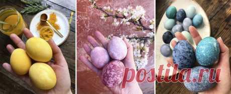 Не только луковая шелуха. Идеи, как вместе с детьми покрасить яйца к Пасхе