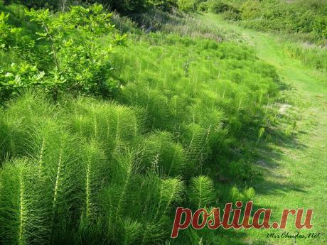 Удобрения, растущие под ногами