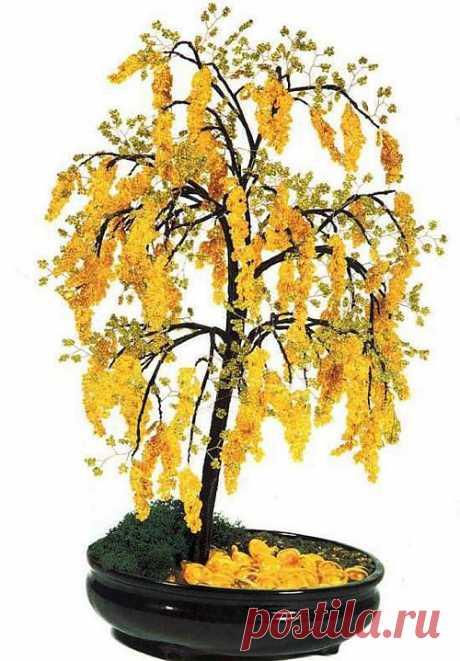 Дерево акации / Деревья, бонсай / Biserok.org