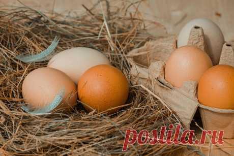«Вред» яиц – вся правда и ложь - Здоровая Россия