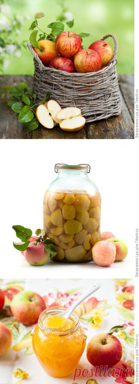 Лучшие способы заготовок из яблок — 6 соток