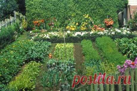 Растения защищают друг друга от болезней и вредителей