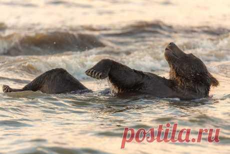 Утренний релакс. Автор фото – Денис Будьков: nat-geo.ru/photo/user/1438/ Снимок сделан на Курильском озере, Камчатка.
