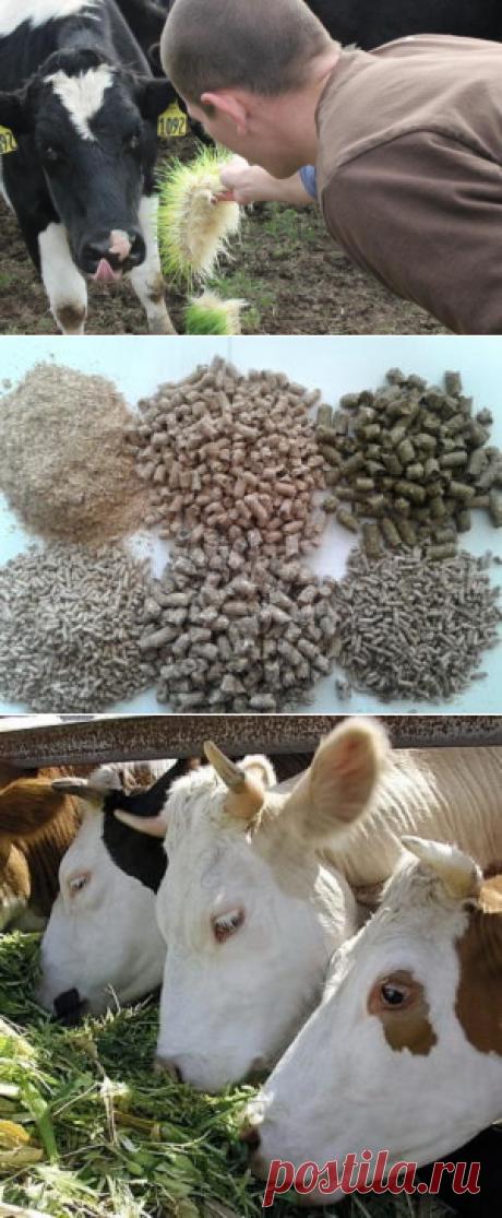 Скармливание подсолнечного шрота разнымвидам сельскохозяйственных животных - БиоКорова