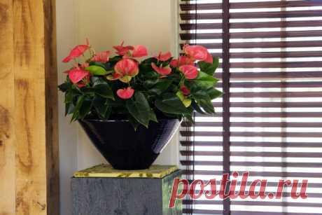 Топ-10 лучших комнатных растений для северных окон | Полезно (Огород.ru)