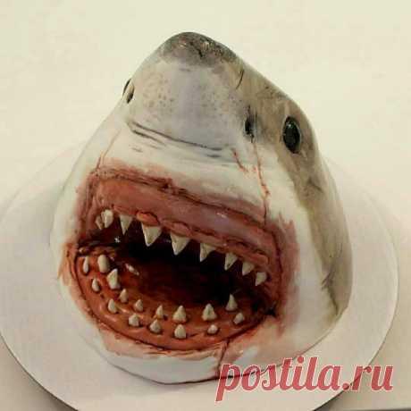 Торт акула