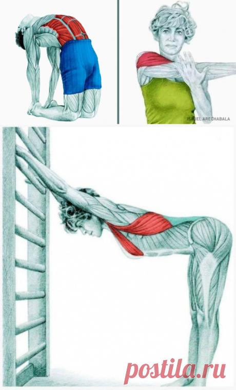 20изображений, которые покажут, какие мышцы вырастягиваете