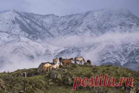 Великолепные пейзажи Дмитрия Старостенкова