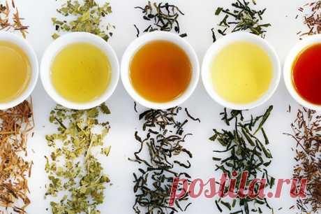 Внимание! Эти изменения ждут всех, кто пьет чай каждый день.
