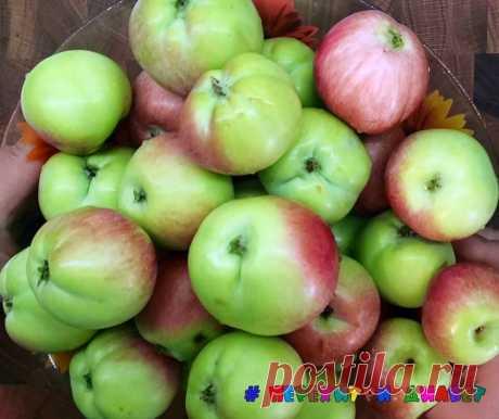 Белевская пастила без сахара, без запекания. Заготавливаем яблоки на зиму | Перехитри Диабет | Яндекс Дзен