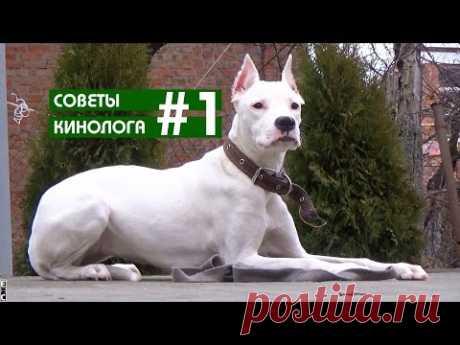 Советы кинолога Алексея Умзара #1