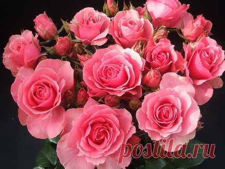 Цветы чисты, красивы и невинны, И дарят сил прилив и красоту. И ощущаю я особое волнение, Когда я вижу эту ценность наяву! ...