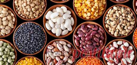 Без белка нельзя выжить, чем питаться?