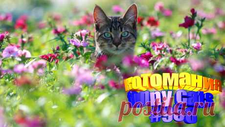 Вам нравится смотреть приколы с котами? Тогда мы уверены, Вам понравится наше видео 😍. Также на котомании Вас ждут: видео кот,видео кота,видео коте,видео котов,видео кошек,видео кошка,видео кошки,видео о котах, видео прикол, видео смешная кошка, кот видео, котики смешные, кошка смешная, кошки и собаки видео, приколы про, про котика, про смешное кошку видео, смешное про котов, смешной кот, смешные кошки видео до слез