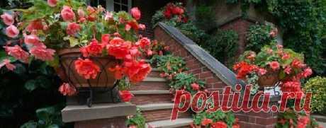 Какие и как лучше посадить цветы в уличные кашпо  Недавно рассматривала фото красиво оформленных цветников в городах Германии. Меня всегда интересовал вопрос, как у них получаются такие пышные красивые цветы в кашпо и вазонах? Я постаралась изучить …