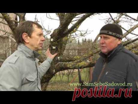 Мхи и лишайники на плодовых деревьях « Видео-блог Садовода