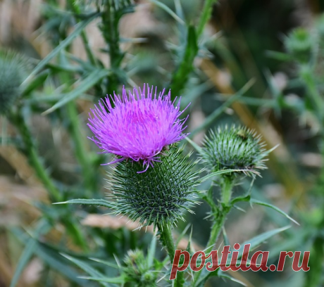Цветы-талисманы: какие растения защищают дом от бедности и неприятностей