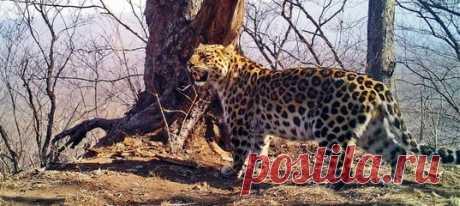Объявления, статусы, пустые странички и странички, заполненные важной информацией – почитайте, как звери в «Земле леопарда» ведут собственную социальную сеть.