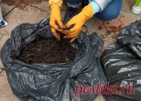 Мое любимое удобрение за копейки: делаем быстрый компост в мешке | Лайфхакни - полезные советы на все случаи жизни | Пульс Mail.ru