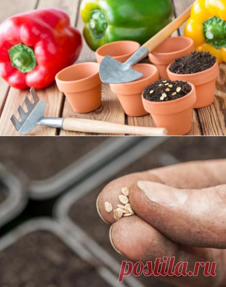 Посевная на повестке дня. 8 вопросов о посеве томатов и перца
