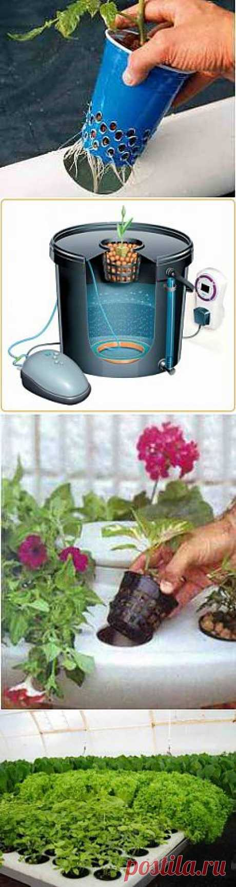 Выращивание методом гидропоники в домашних условиях | Дача - впрок