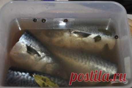 Засол скумбрии - пошаговый рецепт с фото на Повар.ру
