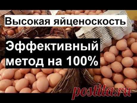 Повышаем яйценоскость кур. Правильное кормление кур несушек. Куры несушки