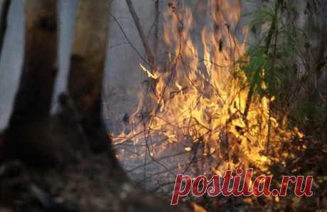 Жители Иркутской области поймали чиновников заподжогами леса — Рамблер/новости