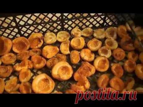 Сушим фрукты - овощи , ЛЕГКО! The dried fruits - vegetables , EASY !