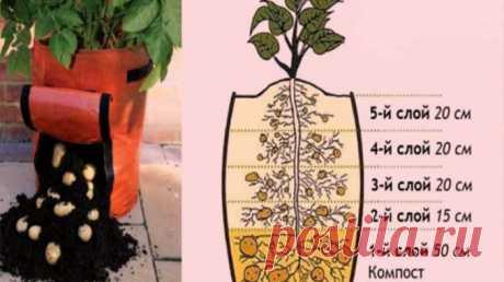 Надоело всё время полоть и окапывать картофель? Тогда этот метод посадки для тебя! — Умный совет
