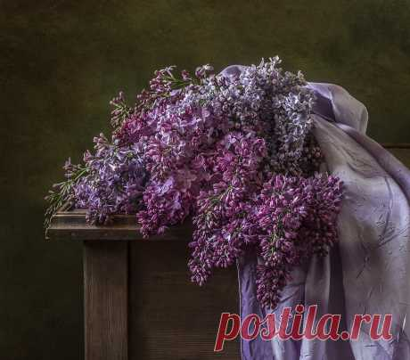 Сирень. Photographer Olga