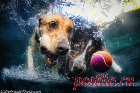 Удивительные подводные собаки | Фотоискусство