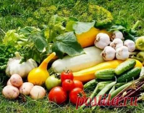Лунный календарь садовода и огородника на сентябрь 2019 года | Astro-ru.ru