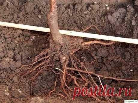 12 правил посадки плодовых деревьев
