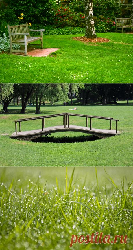 Технология посева газонной травы: не стоит пренебрегать этим