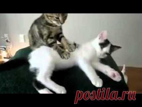 ПРИКОЛЫ №2 Смешные видео с котами. - YouTube