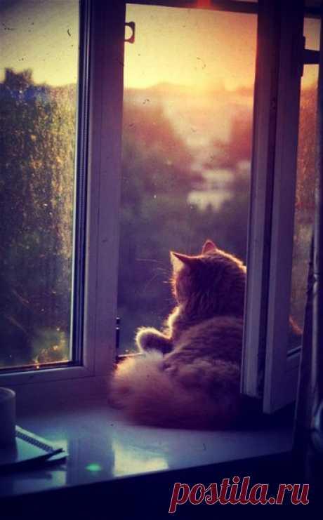 Вечер неслышно заходит в дом, наполняет его тёплым сумраком и уютом. Сейчас, как никогда в другое время суток, ароматен чай и мягок плед. Спящий на кресле кот неслышно спрыгивает на пол и гибко потягивается. Затем идёт к окну и вспрыгивает на подоконник. В полумраке его глаза сверкают как звёзды, что разгораются на тёмном бархате неба...