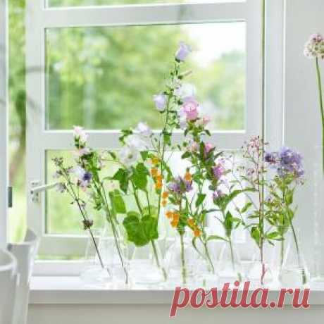 Почему цветы не любят сквозняки?