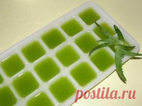 Рецепт молодости: Биостимулированный сок алоэ - Сайт для женщин