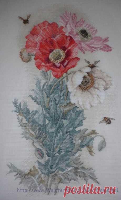 цветок ангелов
