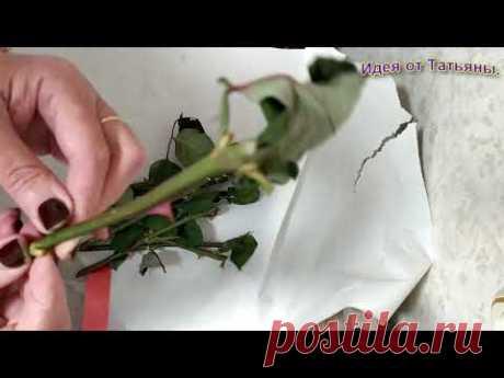 Как укоренить розу из подаренного букета