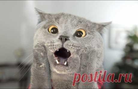 Самые смешные фотографии котов, 20 фото