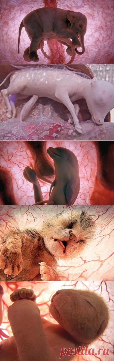 Удивительные фотографии животных в материнской утробе