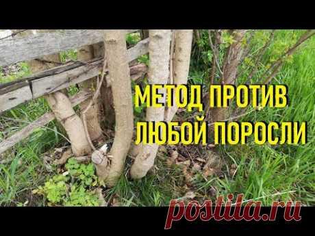 Как избавиться от поросли деревьев и кустарников на участке