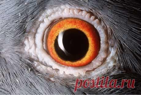 Чьи это глаза: удивительные фото глаз животных крупным планом