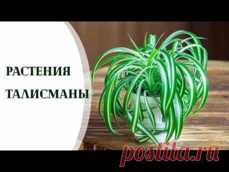 Растения талисманы для всех знаков зодиака. Растения приносящие удачу
