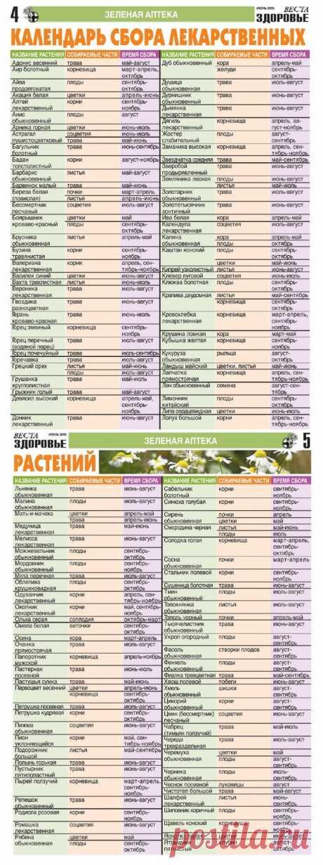 Календарь сбора лекарственных растений
